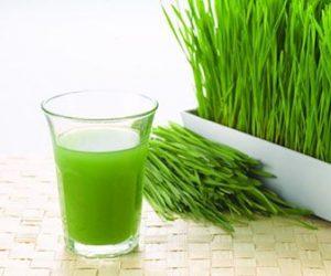 Benefícios da grama de trigo